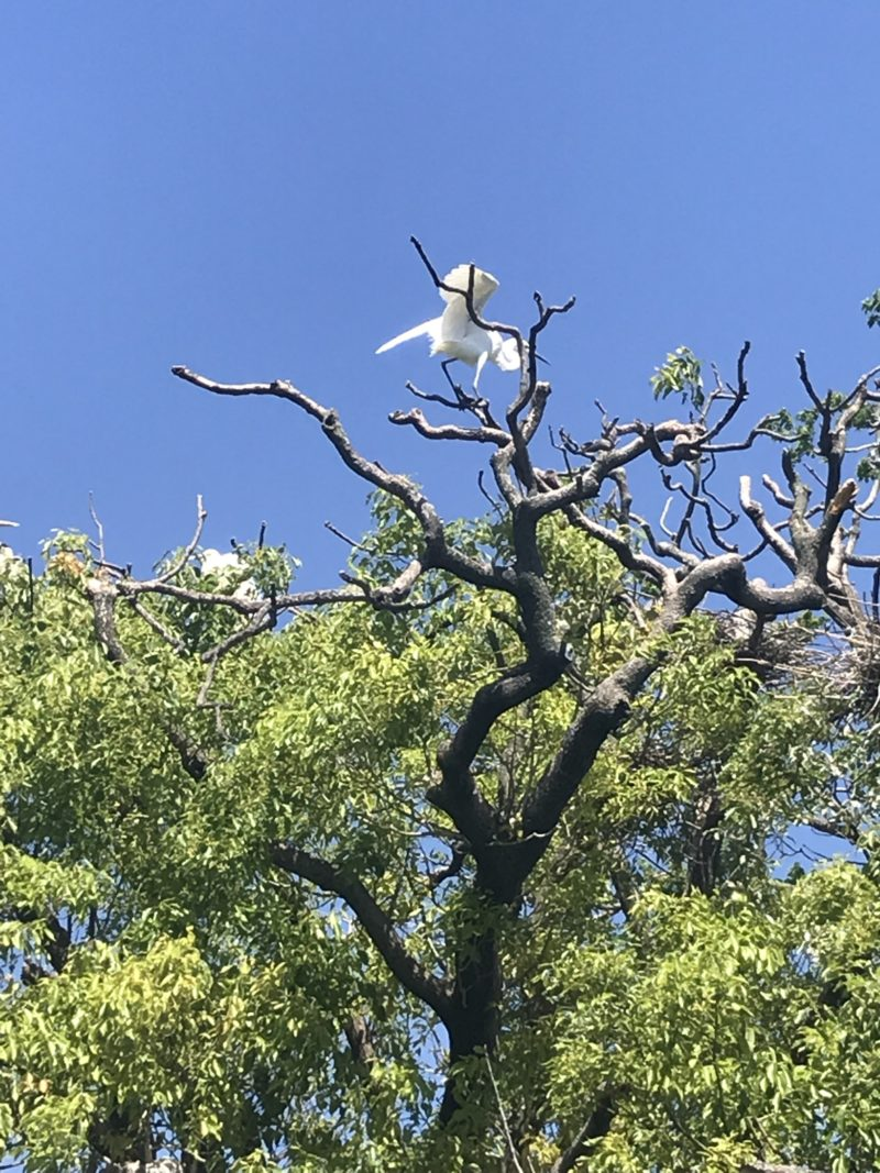 サギ島 咲島 ブラタモリ
