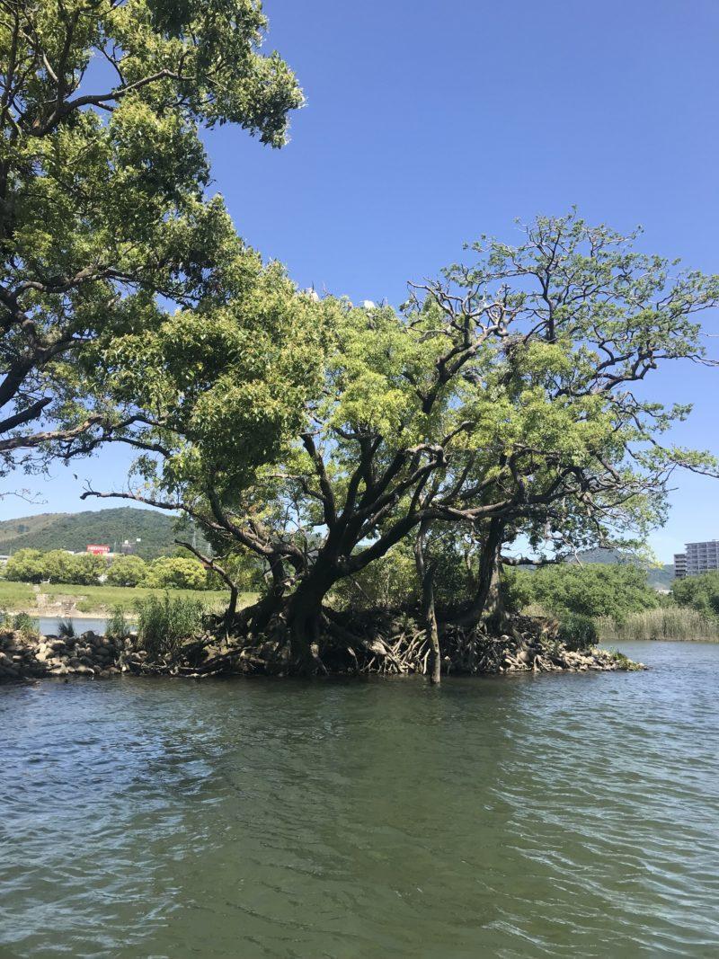 サギ島 咲島
